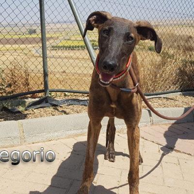Gregorio-(14)web