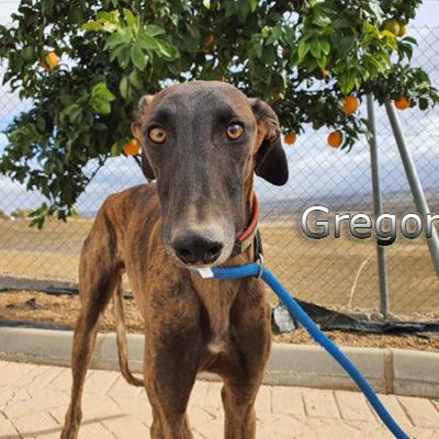 Gregorio-(29)web
