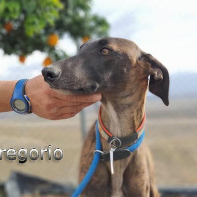 Gregorio-(32)web