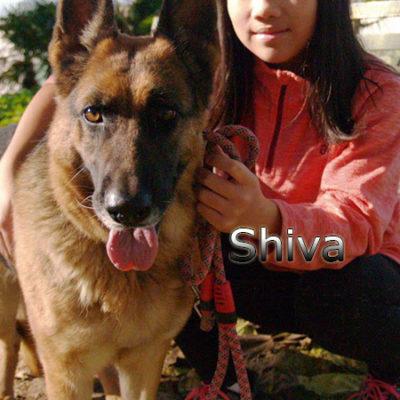 Shiva-(4)web