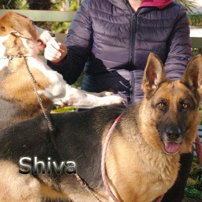 Shiva-(5)web