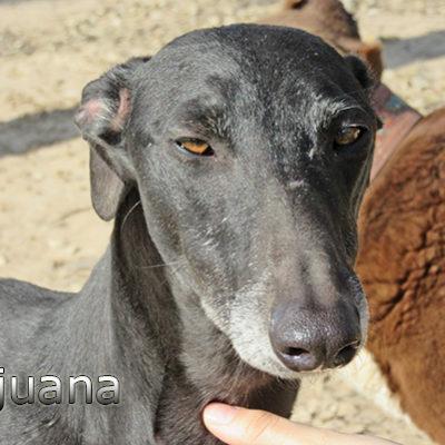 Tijuana-(3)web
