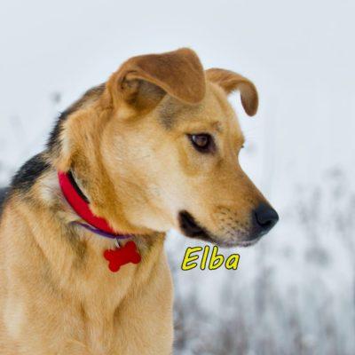 Elba IMG-20200206-WA0070