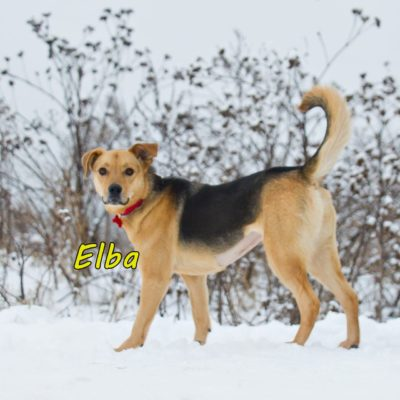 Elba IMG-20200206-WA0077