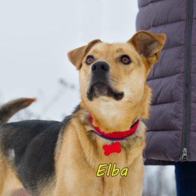 Elba IMG-20200206-WA0080