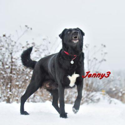 Jenny3 IMG-20200206-WA0084