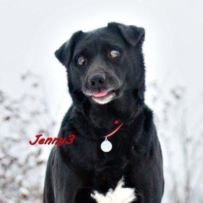 Jenny3 IMG-20200206-WA0086