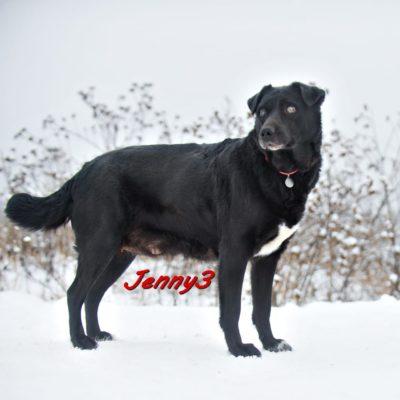 Jenny3 IMG-20200206-WA0088