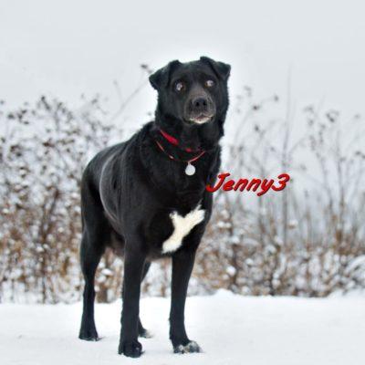 Jenny3 IMG-20200206-WA0090