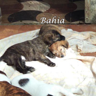Bahia IMG-20200229-WA0005