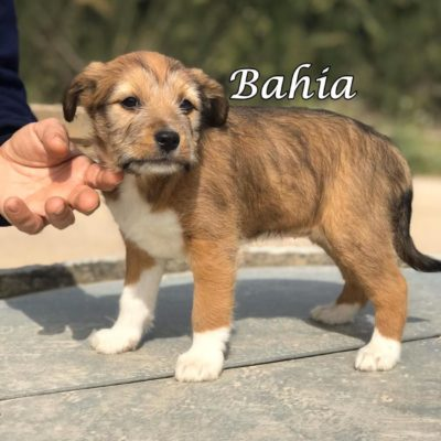 Bahia IMG-20200301-WA0064