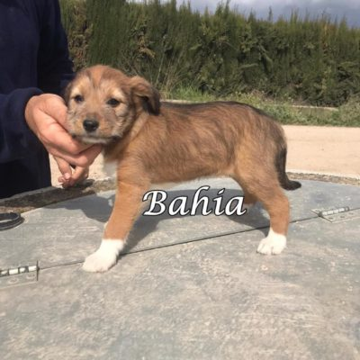 Bahia IMG-20200301-WA0066