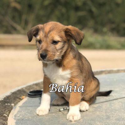 Bahia IMG-20200301-WA0070