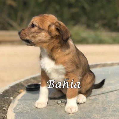 Bahia IMG-20200301-WA0073