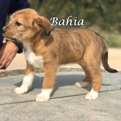 Bahia IMG-20200301-WA0098