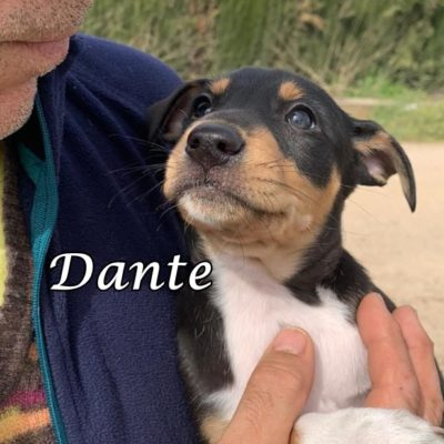 Dante IMG-20200301-WA0131