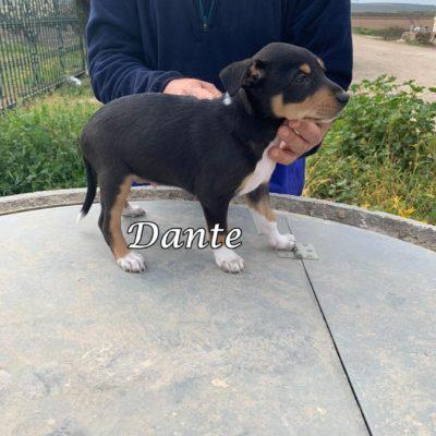 Dante IMG-20200301-WA0136