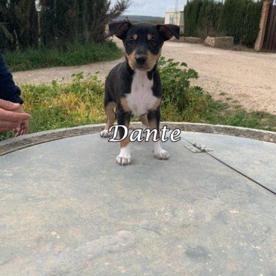 Dante IMG-20200301-WA0137