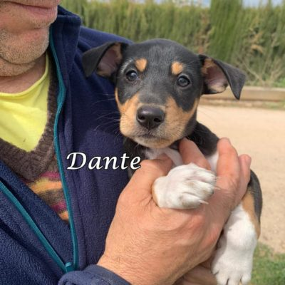 Dante IMG-20200301-WA0139