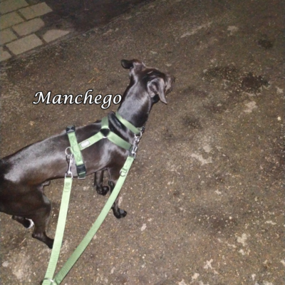Manchego IMG-20200312-WA0027