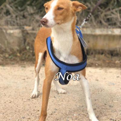 Noa IMG-20200301-WA0145