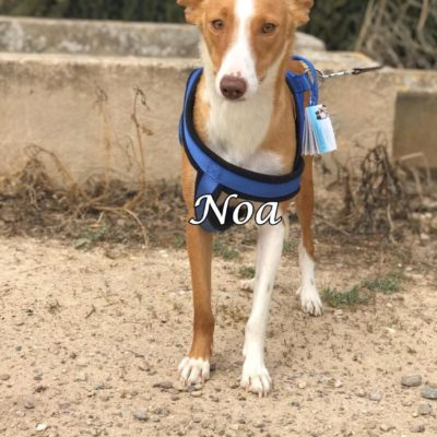 Noa IMG-20200301-WA0146