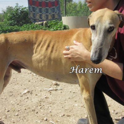 Harem IMG_5898
