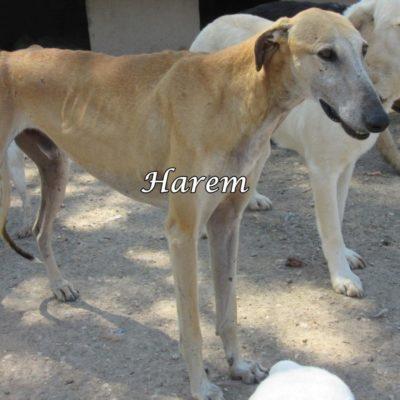 Harem IMG_5906