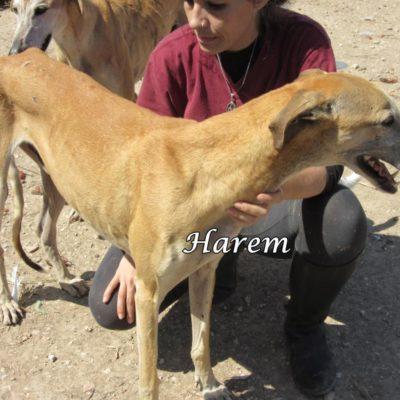 Harem IMG_5907