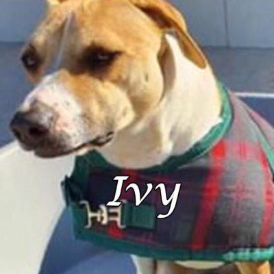 Ivy2 IMG-20200424-WA0019
