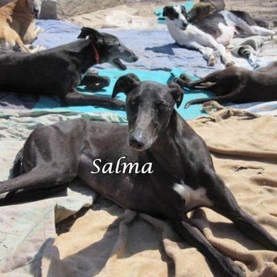 Salma IMG_5933
