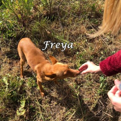 Freya2 IMG-20200228-WA0034