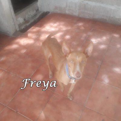 Freya2 IMG-20200516-WA0037