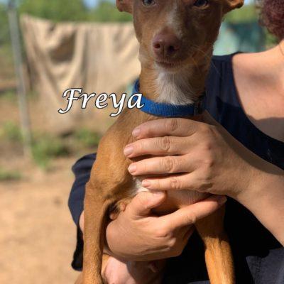 Freya2 IMG-20200518-WA0003