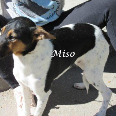 Miso IMG_7006