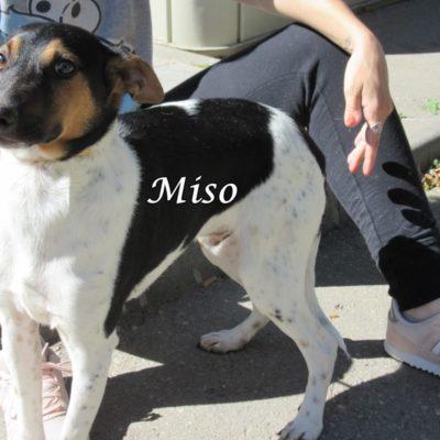 Miso IMG_7012