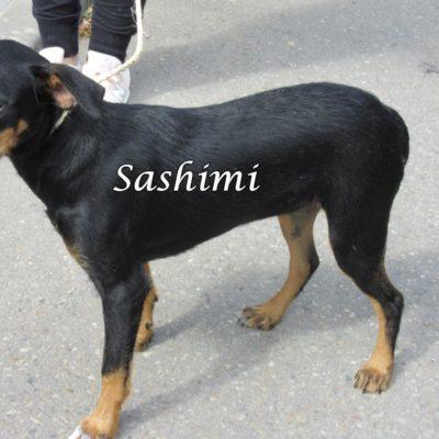 Sashimi IMG_6932