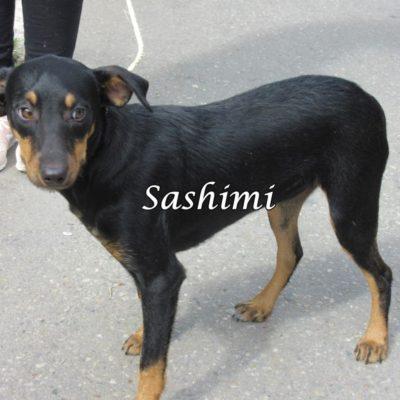 Sashimi IMG_6933