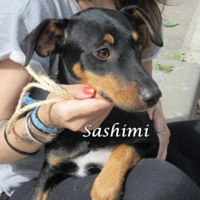 Sashimi IMG_6939
