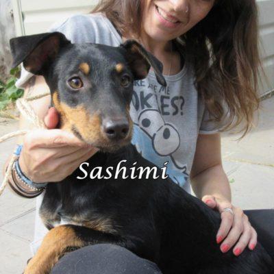 Sashimi IMG_6944