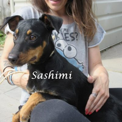 Sashimi IMG_6945