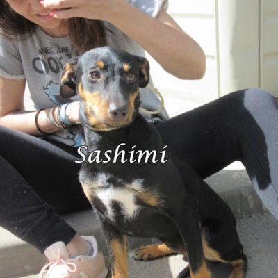 Sashimi IMG_6954