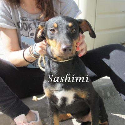 Sashimi IMG_6959
