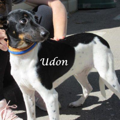 Udon IMG_6977