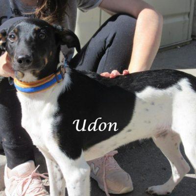 Udon IMG_6979